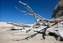 Waipatiki Beach - Napier