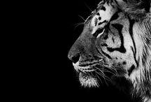 Animal stuff / by Kitty Leering