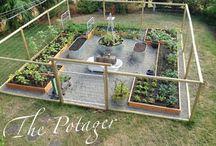 Grönsaksträdgård