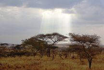 Parque Nacional Serengeti / Fotografías de Udare o facilitadas por los viajeros