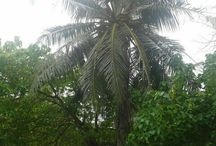 Adi Park / Adi Park is near the Tsunami Monument and Dharubaaruge