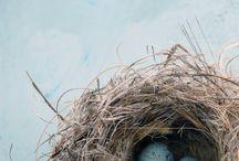 bird nest photography