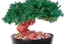 bonsai / by Jennifer Maxwell-Sampson