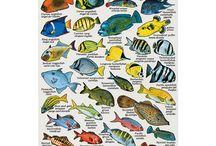 Fish I've seen in Baja