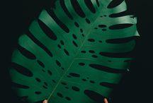 Paper flower & leaves