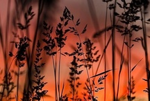 Fotografia della natura