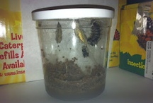 Caterpiller/Butterfly Lessons