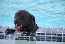 Dog Training Sacramento and Dog Trainers Sacramento