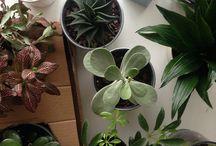 Plants n greens n stuff