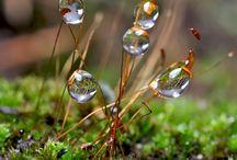 Translucide et transparent