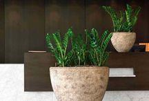 Zamioculcas Zamiifolia / Você conhece a zamioculcas zamiifolia? Então confira nesse board imagens de zamioculca vaso e a zamioculca decoração. Veja também zamioculca como fazer mudas e tenha zamioculca mudas em casa e zamioculca sala. Aproveite! #zamioculcaszamiifolia #zamioculcaszamiifoliamuda #zamioculcaszamiifoliaplanta #zamioculcaszamiifoliadecoracao