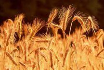 Zemědělství mírný  pás