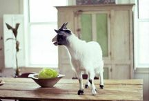 Nick & Nona's Country House / Inspiration and funny/cute animals! / by Aileen Cady