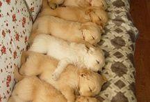 Cuki Kiskutyák