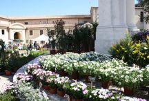 @AnconaFlowerShow / Mostra Mercato di Piante Rare e Inconsuete