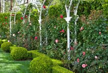 ogród, garden