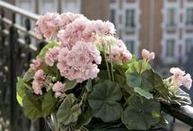 Flora / Flores adecuadas según el clima.