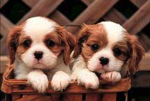 Puppies I want! ASAP
