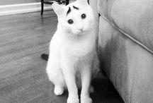 Paixão por gatos