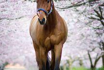 fotoshoot: paarden