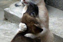 Les chats de nos vies
