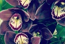 Flowers / by Melanie Coburn