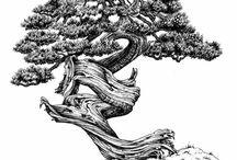dibujos bonsai