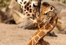 Animals I Love / by Linda Donegan Virtual Assistant