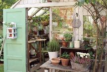 Rustic Glasshouse