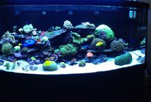 Red sea max 650 / Zee aqarium