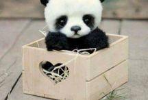 cute pandy aj nieco ine nie len pandy to je jedno