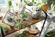 インテリア植物