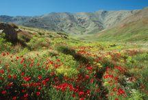 Le Maroc au printemps / Découvrez la beauté du Maroc durant le printemps