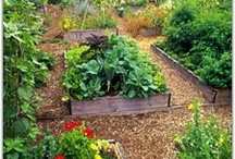 Garden tips and ideas! / by Samantha Goodspeed