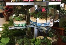 Gift Ideas / Looking for a special gift? Saline Flowerland has many gift ideas.  Stop by or give us a call: 734-429-4458
