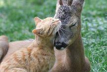 Heartsofties animals / Animals, Nature, Smile, Peace, Love