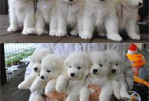 σκυλακια