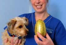 Chocolate Warnings / PDSA urges pet chocolate following hundreds of poisoning cases last year / by PDSA