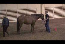 equus <3