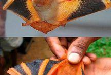 Úžasná zvířata