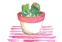 Cactus Sucuulents Plants