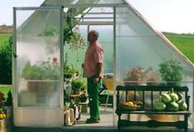 Greenhouse project / by Kathy Park