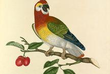 RHS Prints  / Prints of Animals, Birds, Plants