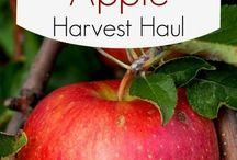 Apple Recipes & Tips