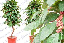 Деревья искусственные.Artificial trees. / Искусственные цветущие и плодовые деревья -сакура, вишня, рябина, лимон, апельсиновое.