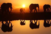 Slony kráčajú nežne