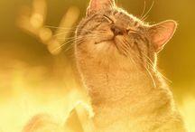 CATS[&]kittens