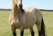 Horses / by Elaine White