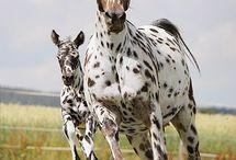Horsegoals