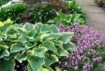 Garden / Zahrada